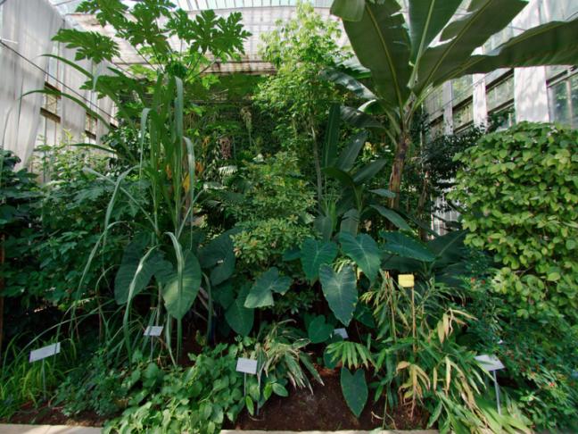 Enquêtes aux Jardins : les empoisonneurs, de Guillaume Le Cornec et Romain Veilletet