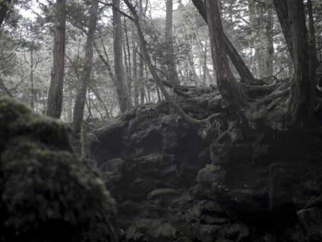 Dans la forêt de Hokkaido, d'Éric Pessan