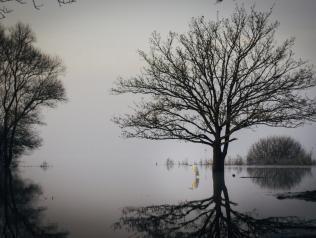 Par un petit matin très froid, cet oiseau respire la sérénité, majestueux sur le lac de Grand-Lieu. Site de Pierre Aigue