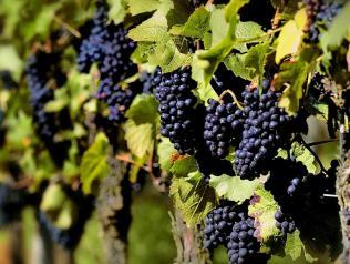 Dans quelles vignes on vit !, de Catherine Malard et Fred Merieau